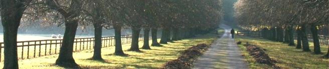 path121.jpg